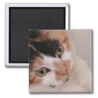 Calico Cat 2 Inch Square Magnet