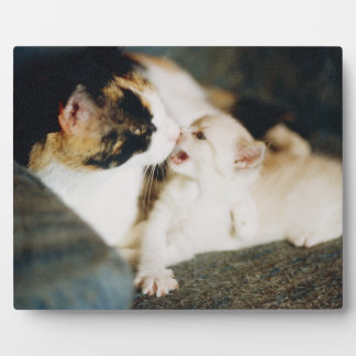 CALICO CAT AND WHITE KITTY PLAQUE