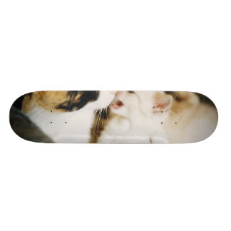 CALICO CAT AND WHITE KITTY SKATEBOARD DECK