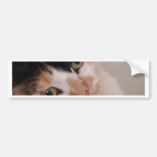 Calico Cat Bumper Sticker