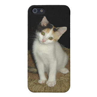 Calico Cat  Case For iPhone SE/5/5s