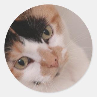 Calico Cat Classic Round Sticker
