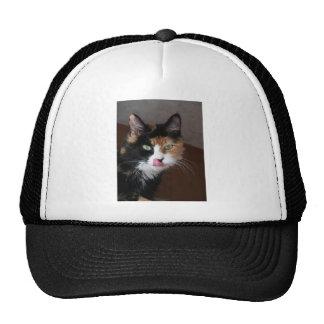 Calico Cat Trucker Hats