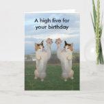 Calico Cat High Five Card