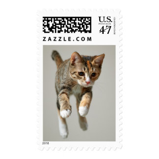Calico Cat Jumping Postage