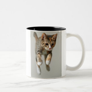 Calico Cat Jumping Two-Tone Coffee Mug