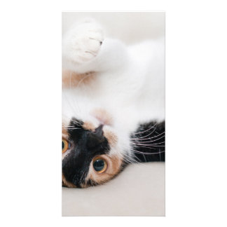 Calico Cat Laying on his back with paws up Card