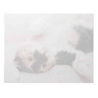 Calico Cat Laying on his back with paws up Note Pad