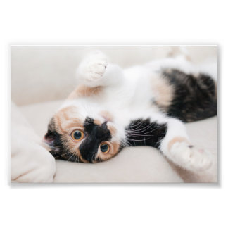 Calico Cat Laying on his back with paws up Photo Print