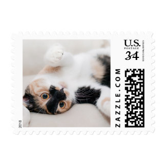 Calico Cat Laying on his back with paws up Postage