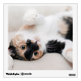 Calico Cat Laying on his back with paws up Wall Sticker