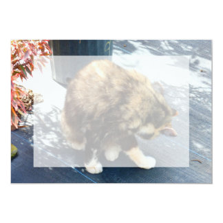 calico cat licking hind legs card