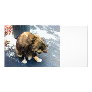 calico cat licking hind legs photo card