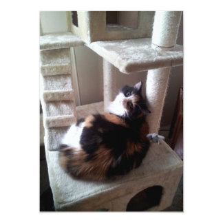 Calico Cat on Cat Tree Card