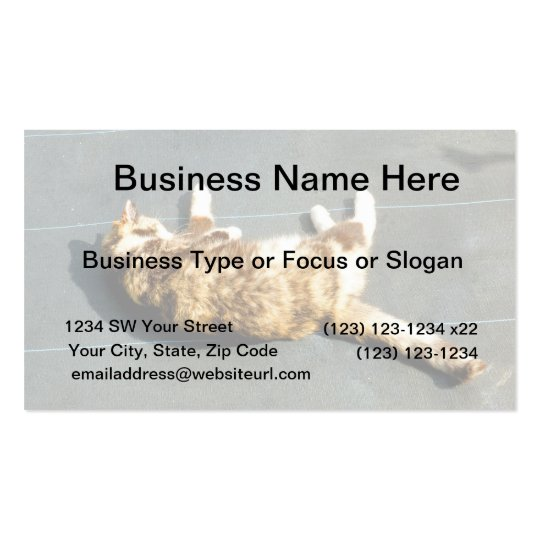 calico cat on side facing away business card