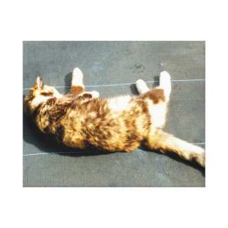 calico cat on side facing away stretched canvas prints