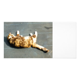 calico cat on side facing away photo cards