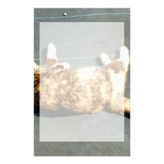 calico cat on side facing away stationery