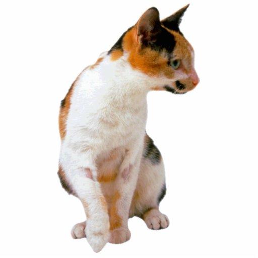 Calico Cat Photo Cutouts