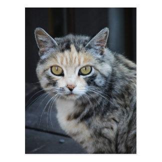 Calico Cat Post Card