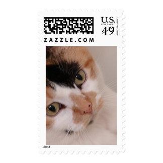 Calico Cat Postage