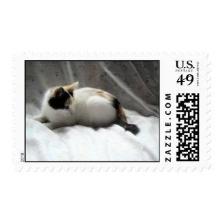 Calico Cat Postage Stamp