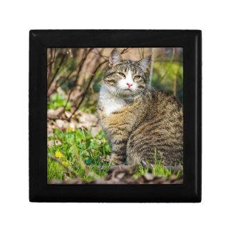 Calico Cat Roams Outside Jewelry Box