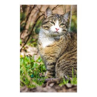 Calico Cat Roams Outside Stationery