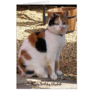 Calico cat sitting in the garden  Birthday Card