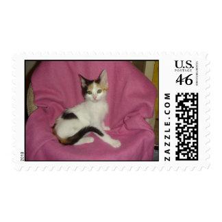 Calico Cat Stamp