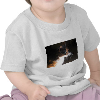 Calico Cat Whiskers Tee Shirts