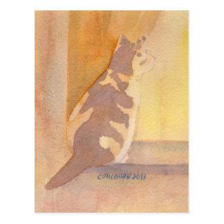 Calico Cat Window sitter Postcard