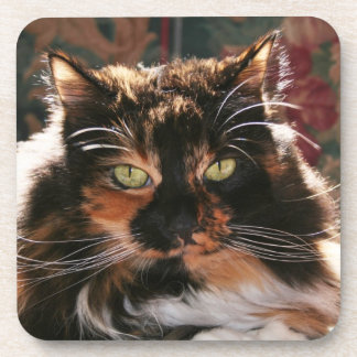 Calico Cat with Green Eyes Coaster