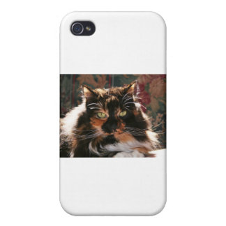 Calico Cat With Green Eyes iPhone 4/4S Covers