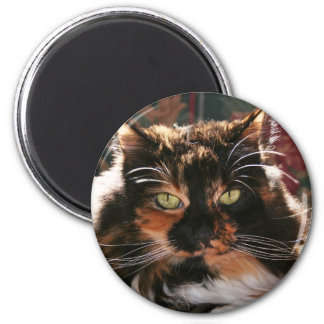 Calico Cat With Green Eyes Magnets