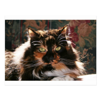 Calico Cat With Green Eyes Postcard