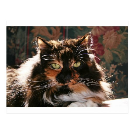 Calico Cat With Green Eyes Postcard | Zazzle