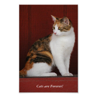 Calico Cats Rule! Poster
