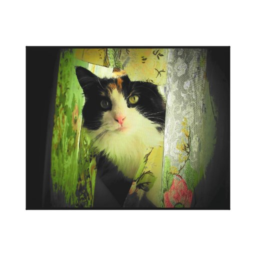 Calico Curtain Cat Gallery Wrapped Canvas