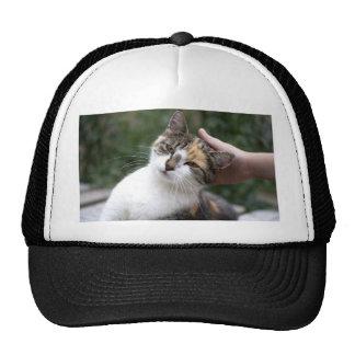 Calico Enjoys A Stroke Trucker Hat