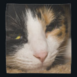 """Calico Face Bandana<br><div class=""""desc"""">Macy, a young, full blooded Calico cat has climbed under a rug thinking she is hiding, to play. Did you know that only the female Calico&#39;s have all 3 colors (brown, black and White)? Male Calico&#39;s only have black and white. Looking for more prints or products? Feel free to visit...</div>"""