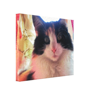 Calico Face by djoneill Canvas Print