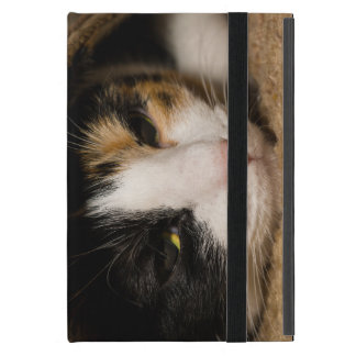 Calico Face Case For iPad Mini