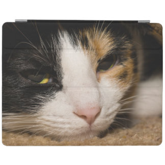 Calico Face iPad Smart Cover