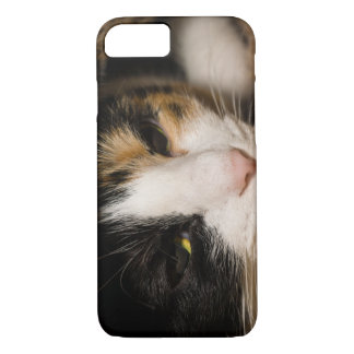 Calico Face iPhone 7 Case