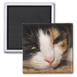 Calico Face Magnet