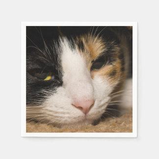 Calico Face Napkin