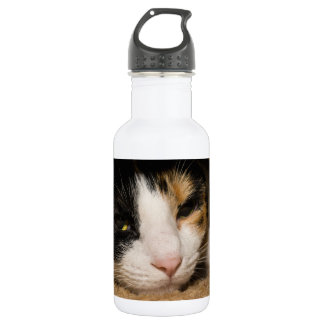 Calico Face Stainless Steel Water Bottle