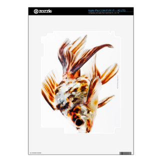Calico Fantail Comet goldfish Decals For iPad 3
