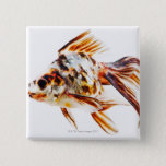 Calico Fantail Comet goldfish Pinback Button